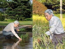Nhà vua và Hoàng hậu Nhật Bản trồng lúa nuôi tằm