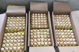 Tiêu hủy hơn 1 vạn quả trứng gia cầm và hàng trăm kg thịt bẩn nhập lậu từ Trung Quốc