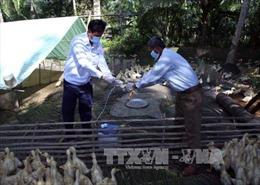 Nam Định tập trung ngăn cúm gia cầm A/H5N1 lan rộng
