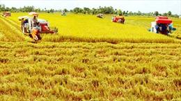 Giải pháp sản xuất sạch trong chuỗi giá trị lúa gạo ĐBSCL