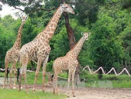 Chứng nhận cơ sở bảo tồn đa dạng sinh học 73 loài động vật quý, hiếm