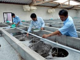 Xây dựng Trung tâm sản xuất tôm giống công nghệ cao tại Trà Vinh
