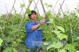 Nhiều mô hình thanh niên khởi nghiệp hiệu quả ở Ninh Bình