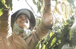 Nâng cao vai trò quản lý của nữ nông dân trồng cà phê