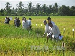 Tiền Giang chống hạn mặn bảo đảm thu hoạch chắc 28.000 ha lúa