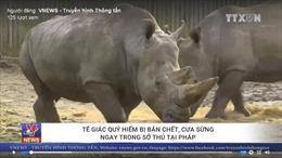 Tê giác quý hiếm bị bắn chết, cưa sừng ngay trong sở thú Pháp