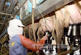 Công bố công nghệ giống phôi bò sữa cao sản