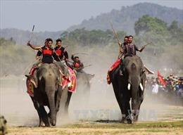 Kỳ thú voi đua tại lễ hội cà phê Buôn Mê Thuột