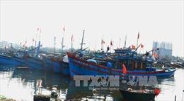 Bến Tre phát triển tổ đội liên kết đánh bắt hải sản xa bờ
