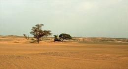 Lý giải mới gây sốc về việc Sahara biến thành sa mạc