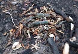 Nhiều hải sản nuôi chết chưa rõ nguyên nhân tại Cam Ranh