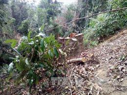 Thủ tướng yêu cầu 3 tỉnh kiểm tra phản ánh về chặt phá rừng