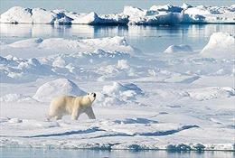 Nghị viện châu Âu kêu gọi cấm khai thác Bắc Cực