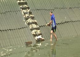 Kiểm tra đường ống nước thải của Nhà máy DAP 2 sau sự cố làm 7 tấn cá chết