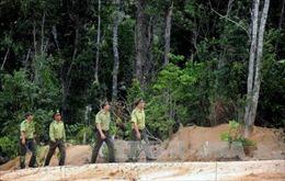 Tập trung phòng chống cháy rừng mùa khô