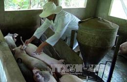Cả xã có 600 lao động đăng ký học nghề hoạn lợn