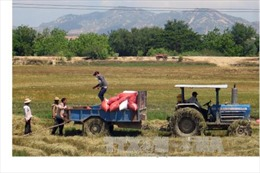 Lợi nhuận từ doanh nghiệp xuất khẩu gạo dần chuyển sang nông dân