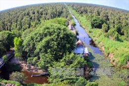 Cơn mưa 'vàng' làm giảm nguy cơ cháy rừng ở Cà Mau
