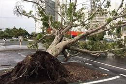 Bang Queensland của Australia tan hoang sau siêu bão Debbie