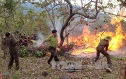 Tăng cường phòng, chống cháy rừng mùa khô 2017