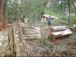 Gian nan giữ rừng vùng giáp ranh