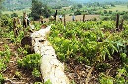 Tiếp diễn nạn phá rừng tại Vườn Quốc gia Mũi Cà Mau