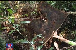 Bất thường trong vụ chặt cây phá rừng ở Vườn quốc gia Ba Bể