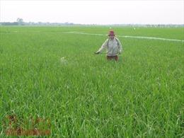 Chuyển mục đích sử dụng đất trồng lúa tỉnh Hải Dương, Thái Nguyên và Hòa Bình