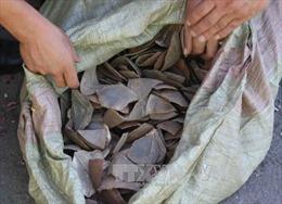 Phát hiện lô hàng chứa vảy tê tê ở Sân bay Nội Bài