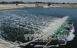 Xử lý nghiêm việc lấn chiếm đất rừng phòng hộ ven biển để nuôi tôm trên cát