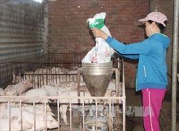 Đồng Nai: Đeo vòng... cho lợn, người nuôi lúng túng
