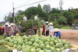 Hỗ trợ nông dân Quãng Ngãi tiêu thụ dưa hấu