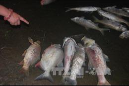 Cá chết trên sông Bồ là do môi trường nuôi không đảm bảo