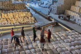 Xuất khẩu gạo lại rơi vào vòng xoáy trầm lắng