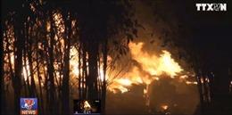 Cháy xưởng tái chế nhớt giữa rừng tràm ở Đồng Nai