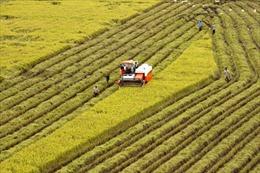 Tích tụ ruộng đất: Lấy mục tiêu hiệu quả là cuối cùng