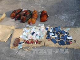 Triệt xóa trường gà giữa khu du lịch sinh thái ở Phú Yên