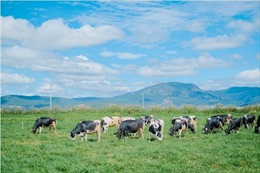 Chuyện chưa kể về hành trình ra mắt sữa tươi 100% Organic tiêu chuẩn châu Âu