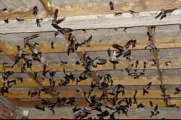 Nhiều gia đình xây nhà nuôi chim yến không có giấy phép xây dựng