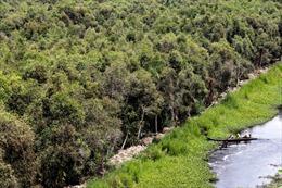 Mưa to diện rộng 'giải cứu' 43.500 ha rừng Cà Mau trước nguy cơ cháy