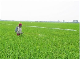'Giải phóng' đất đai, tích tụ ruộng đất để thúc đẩy nông nghiệp