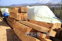 Khởi tố, tạm giam 2 đối tượng làm giả giấy tờ để mua bán gỗ lậu