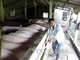Ngân hàng tiếp sức giải cứu hộ nuôi lợn nhưng phải kiểm soát vốn vay