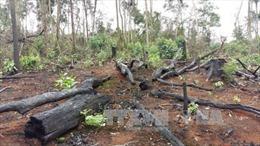 Kiên quyết xử lý tình trạng tàn phá rừng ở Đắk G'Long