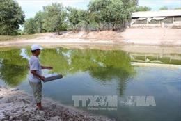 Thừa Thiên - Huế: Chấn chỉnh tình trạng cơ sở chăn nuôi gây ô nhiễm ở vùng cát nội đồng