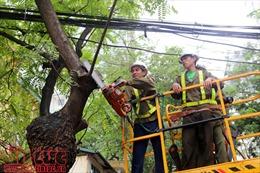 Kiểm tra toàn bộ cây xanh trong trường học, bệnh viện, công sở tại Hà Nội