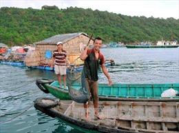 Khuyến khích đầu tư phát triển nuôi biển