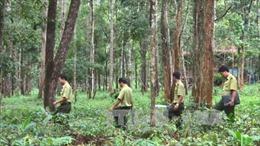 Các tỉnh Tây Nguyên không chuyển rừng tự nhiên sang mục đích khác