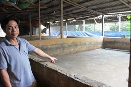 'Giải cứu' thịt lợn và bài học cho nông nghiệp Việt Nam