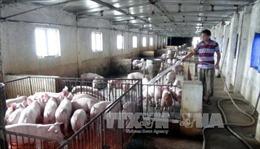 'Giải cứu' nông sản: Cần có cơ quan chịu trách nhiệm về nghiên cứu thị trường